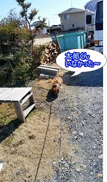 太郎くん不在