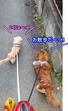 お散歩だー!!
