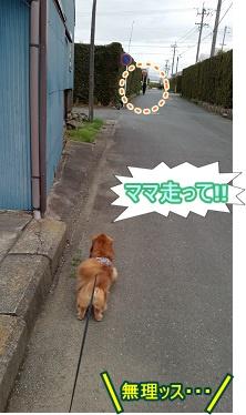 ママ走って!!