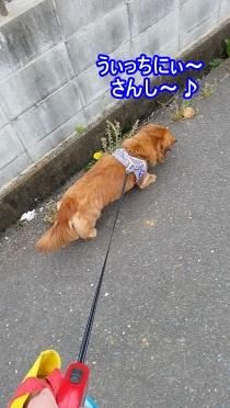 ごきげん犬太郎