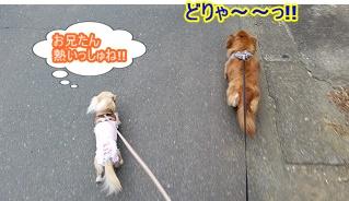 熱すぎる犬太郎