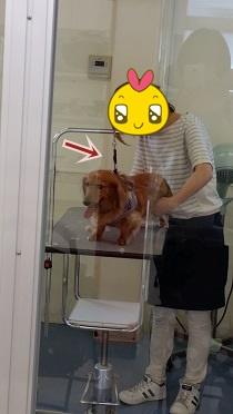 繋がれた犬太郎