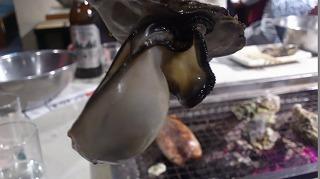 PAP_0000牡蠣