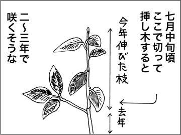 kfc00217-7