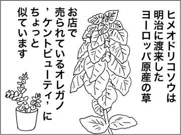 kfc00224-4