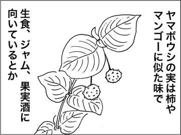 kfc00236-3