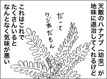 kfcp150224-6