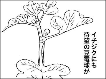 kfc00317-4