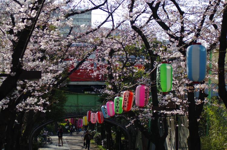 2015年3月28日 越中島 ケヨ34 020