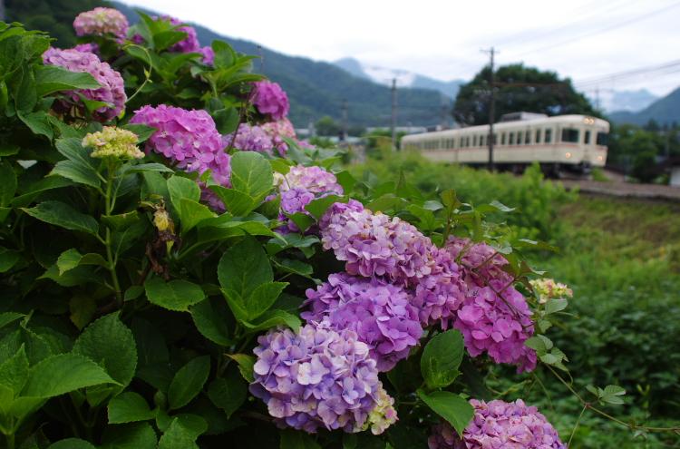 2015年7月4,5日 富士急 026