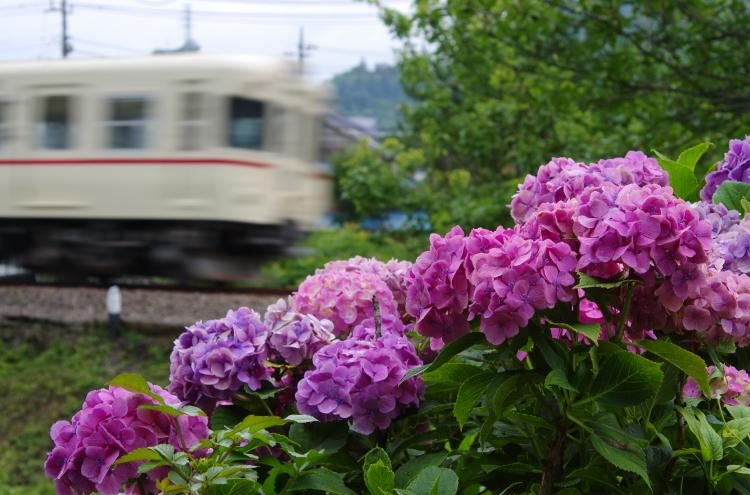 2015年7月4,5日 富士急 040