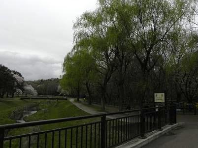 4月上旬の野川公園