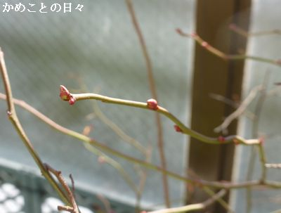 P1160014-b.jpg