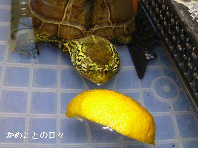 P1160521-suke.jpg