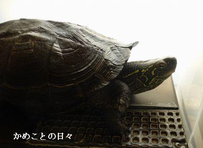 P1160932-c.jpg