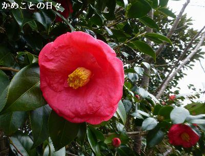 P1170387-t.jpg