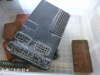 P1180906-co.jpg