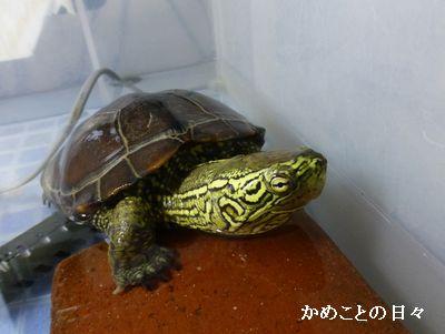 P1190563-suke.jpg