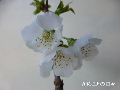 P1190618-hana.jpg