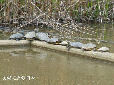P1190718-hanasima1.jpg