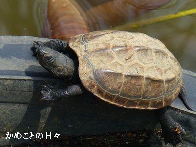 P1190722-kuro.jpg