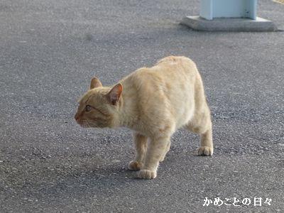 P1200761-cat.jpg