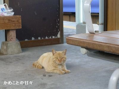 P1200762-cat2.jpg