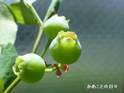 P1210260-berry.jpg
