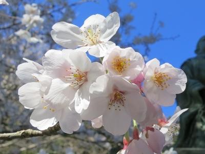 04-02 桜
