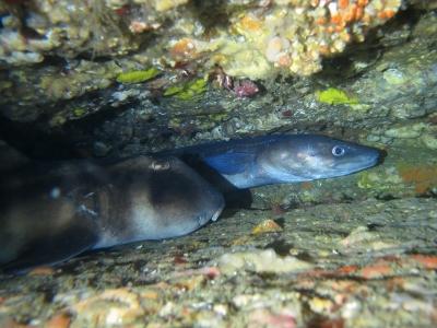 05-03 ネコザメ&クロアナゴ
