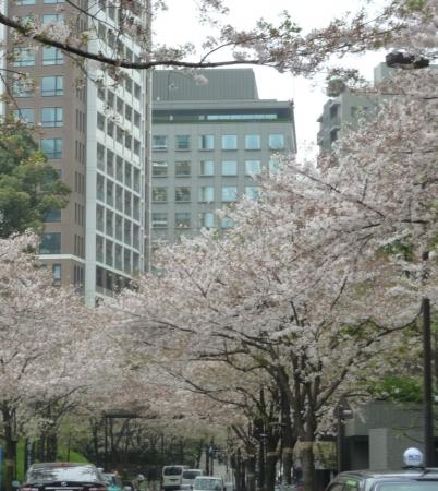 07桜並木