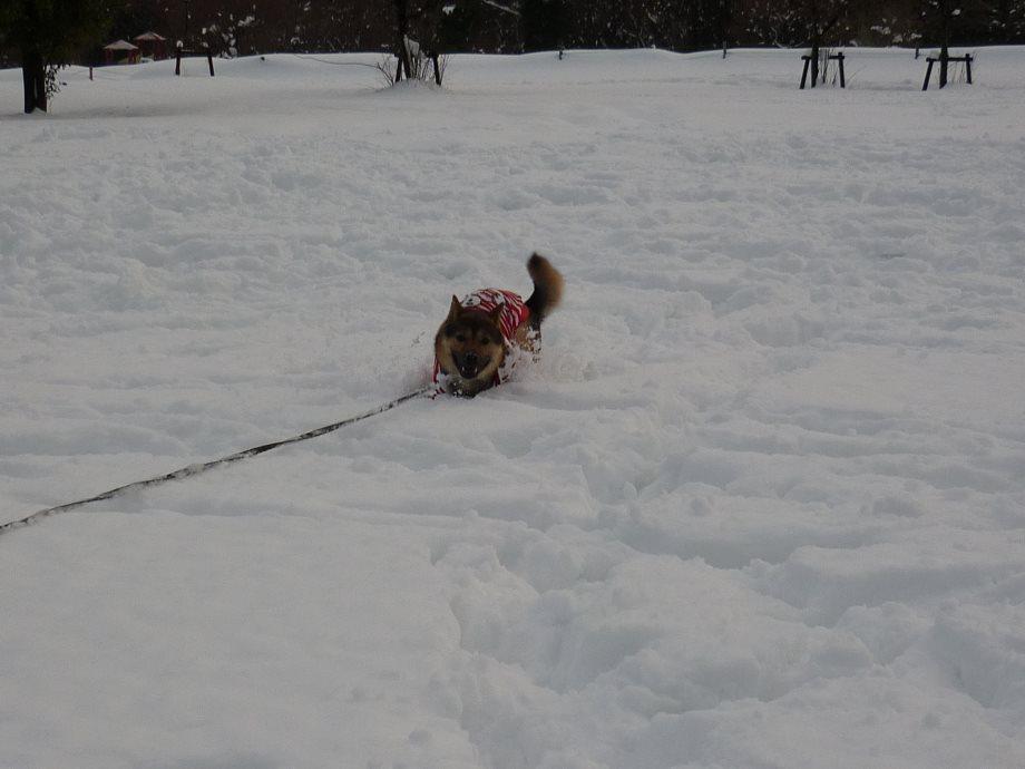 201501雪遊び4-13