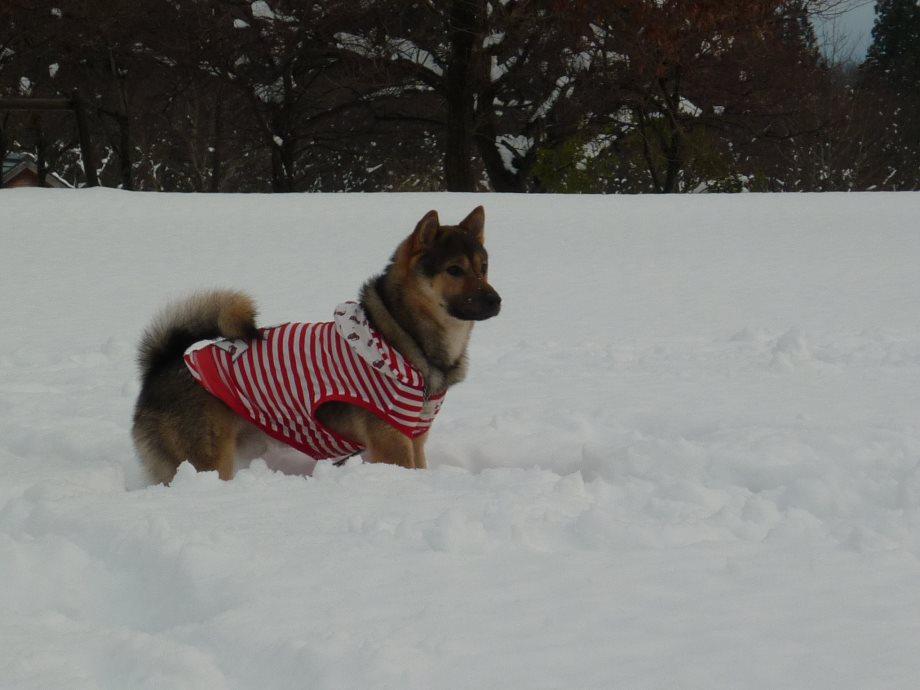 201501雪遊び6-10