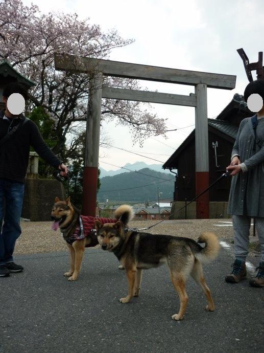 201504あきちゃん三姉妹03-18