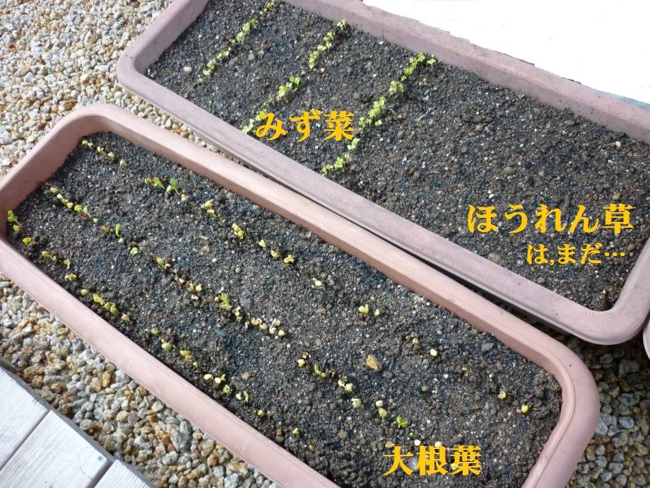 201504松阪01-23