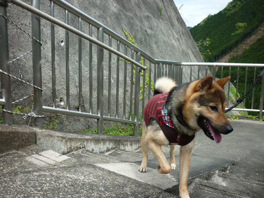 201505蓮ダム01-09