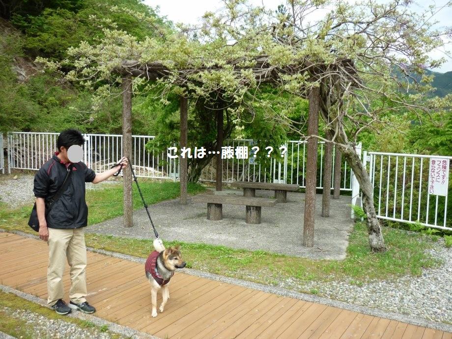 201505蓮ダム01-19