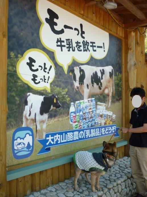 201505熊野1-04