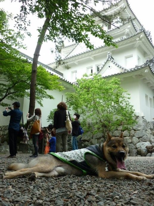 201505岐阜西濃の旅04-07