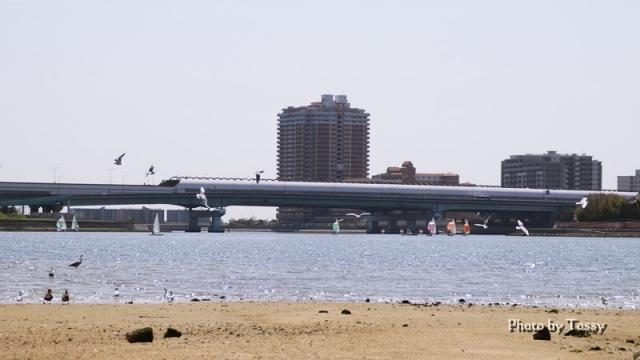 香櫨園 海 ウインドサーフィン カモメ
