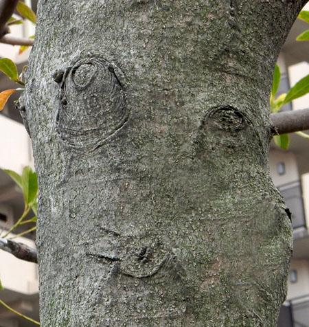 20150404口笛を吹く木