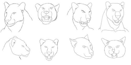 黒豹の顔練習1