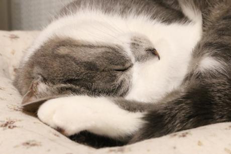 おやすみにゃ!