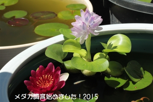 IMG_0956_2015070206452362f.jpg