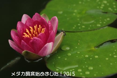 IMG_1319.jpg