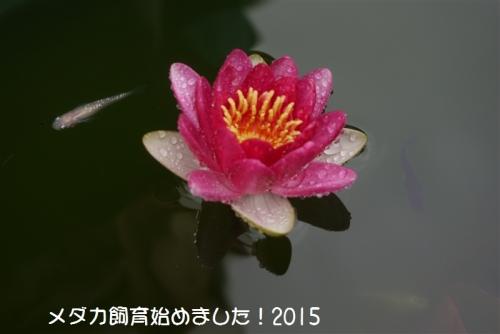 P1110566.jpg