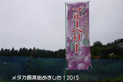 P1110581.jpg
