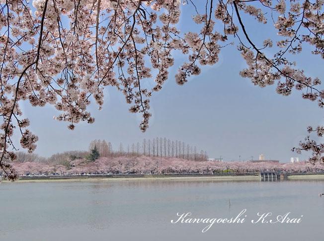 桜満開の風景