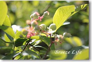 bluberry150507.jpg