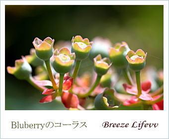 blueberrychorus.jpg